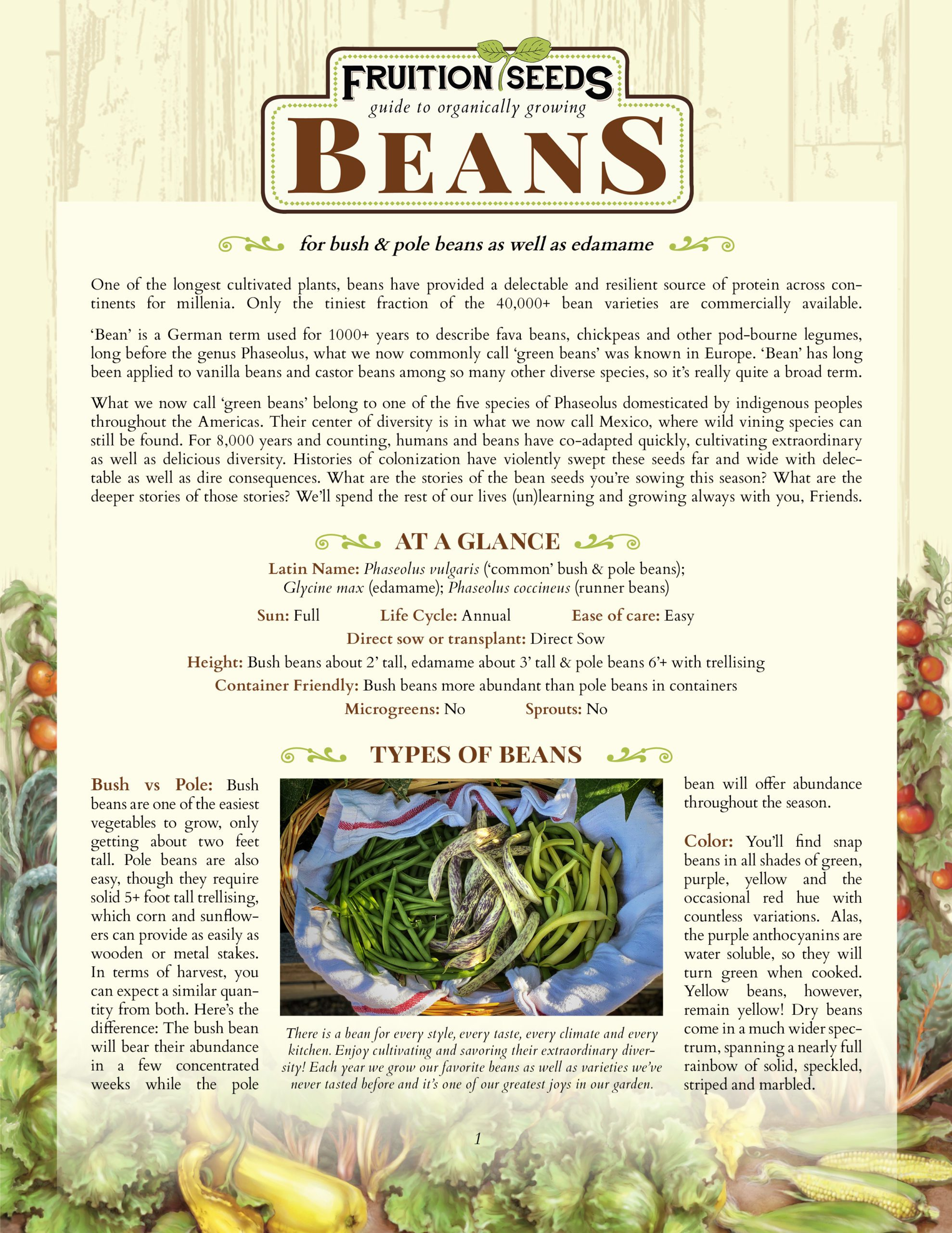 Growing Guide for Bean Growing Guide