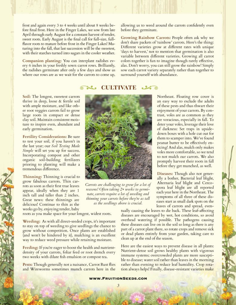 Thumbnail of Growing Guide for Carrot Growing Guide