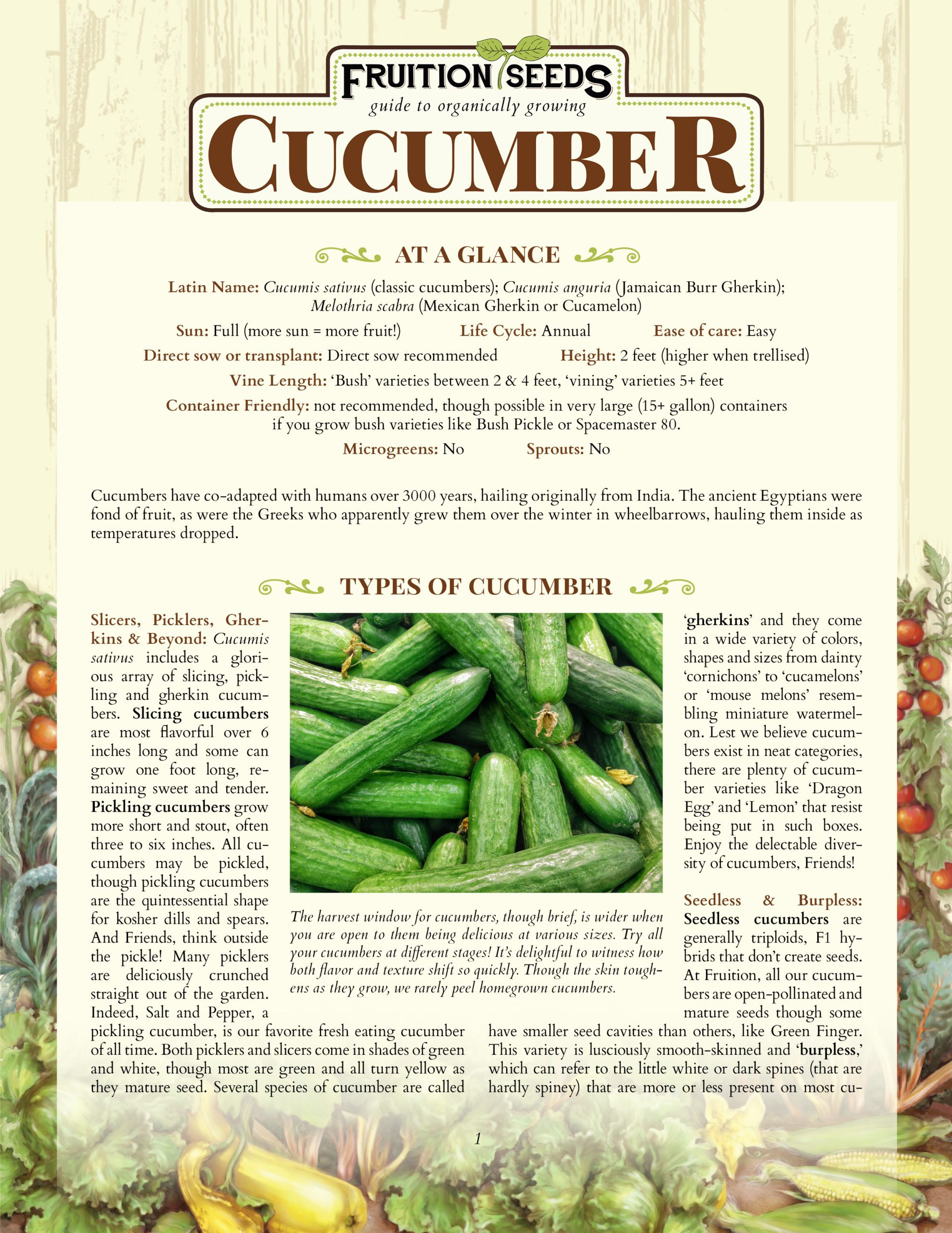 Growing Guide for Cucumber Growing Guide
