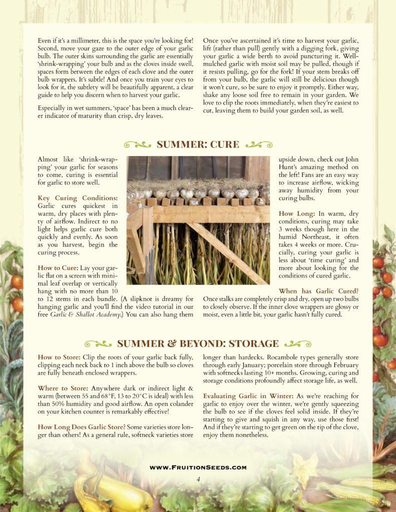 Thumbnail of Growing Guide for Garlic Growing Guide