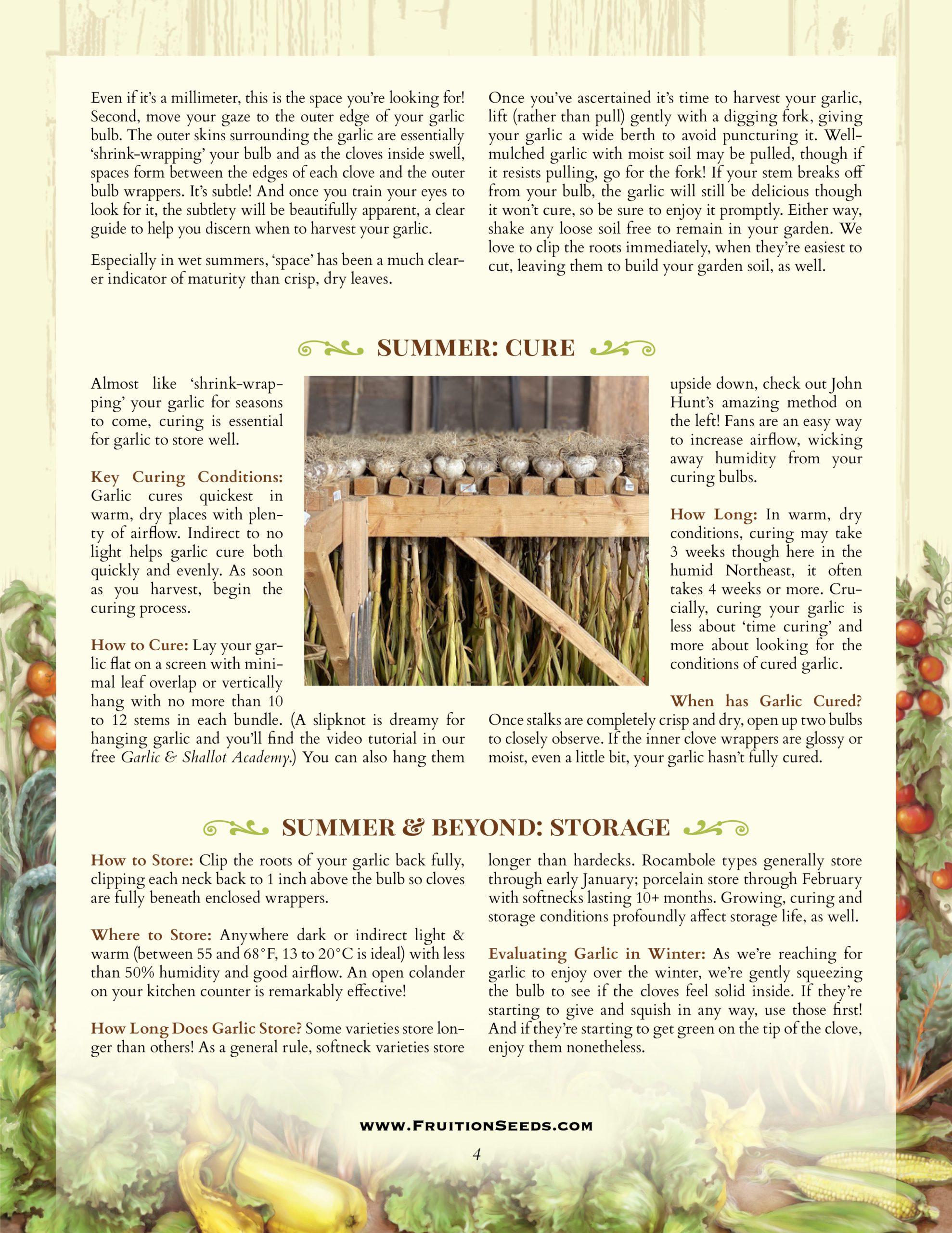 Growing Guide for Garlic Growing Guide