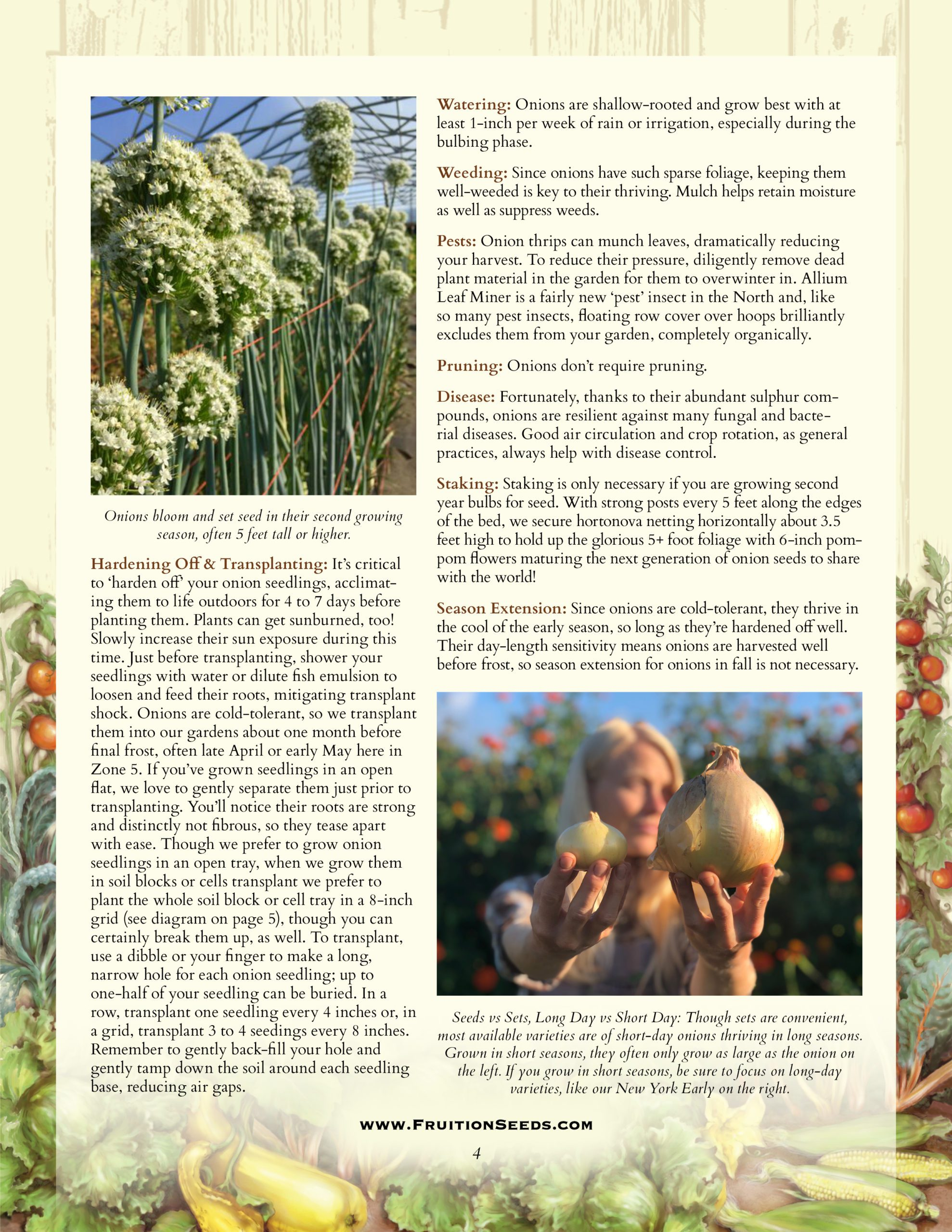 Growing Guide for Onion Growing Guide