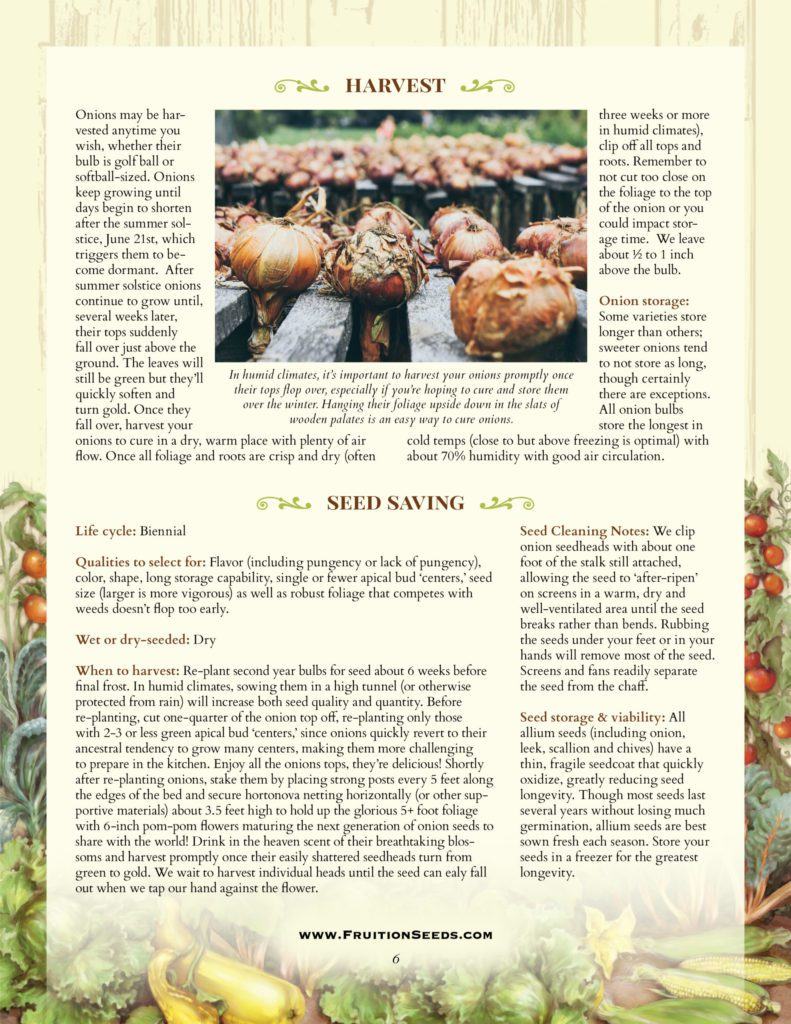 Thumbnail of Growing Guide for Onion Seedkeeping