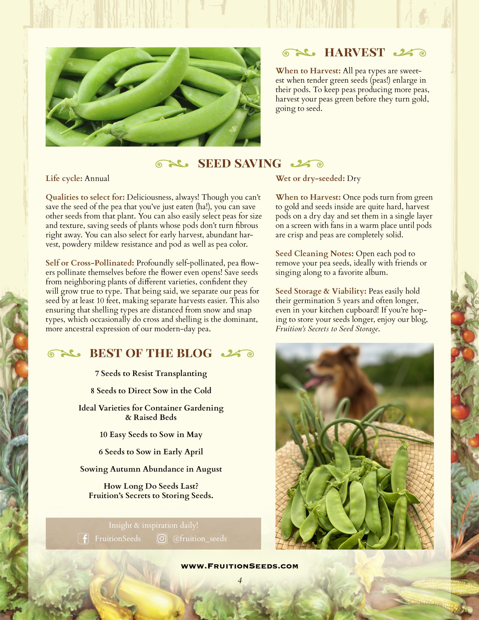 Growing Guide for Peas Seedkeeping Guide