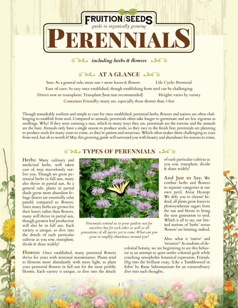 Thumbnail of Growing Guide for Perennial Herbs and Flowers Growing Guide