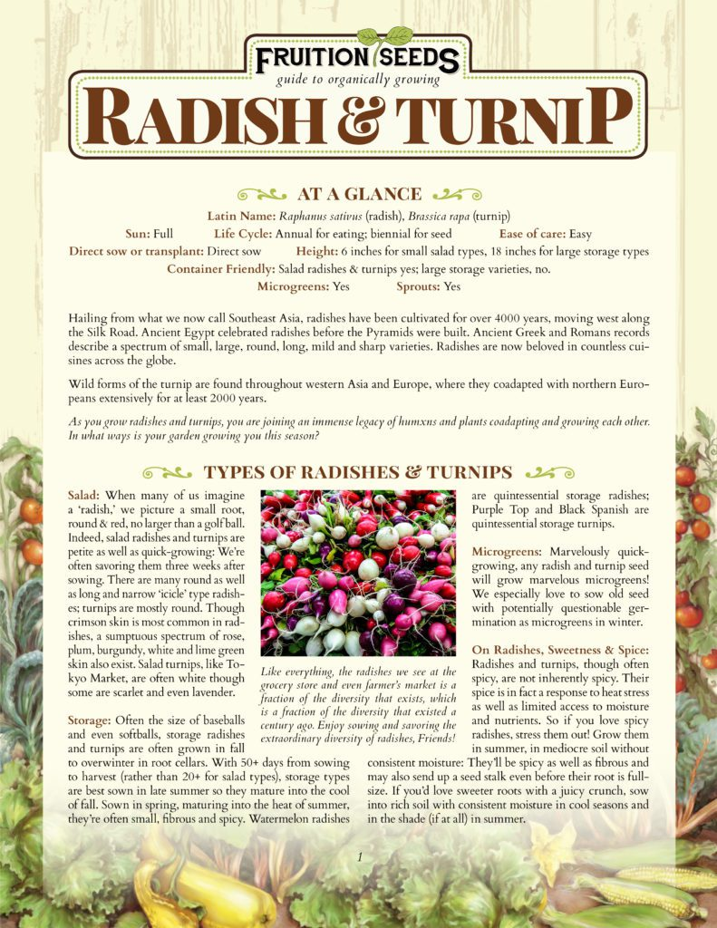 Thumbnail of Growing Guide for Radish & Turnip Growing Guide!