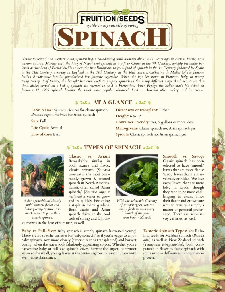 Thumbnail of Growing Guide for Spinach Growing Guide