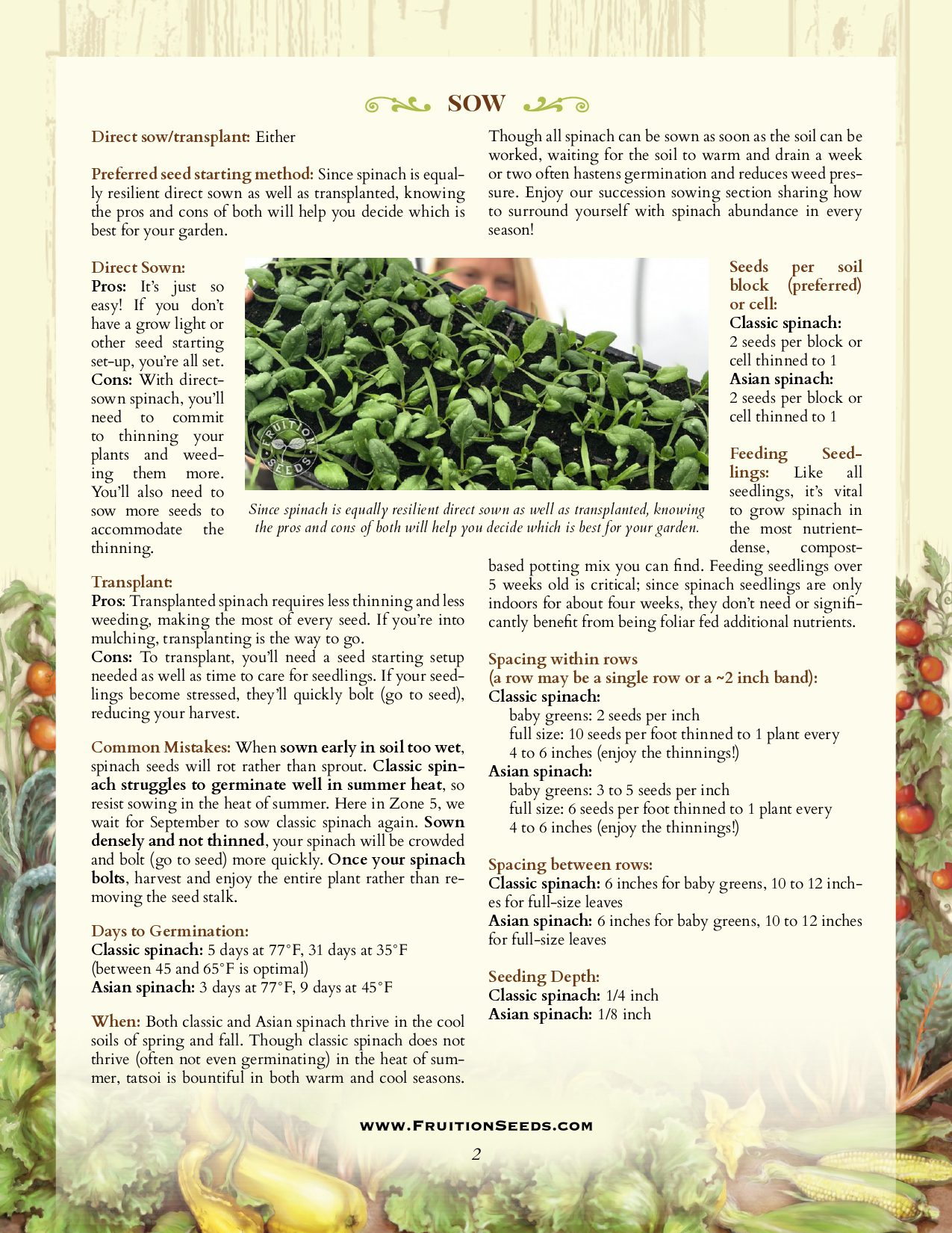 Growing Guide for Spinach Growing Guide