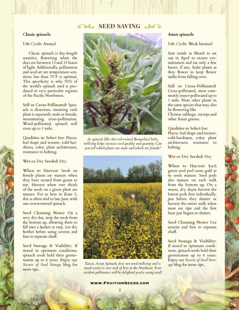Thumbnail of Growing Guide for Spinach Seedkeeping Guide