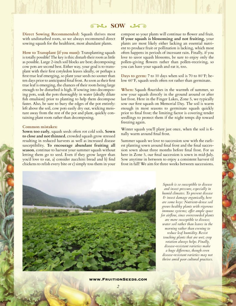 Thumbnail of Growing Guide for Squash Growing Guide