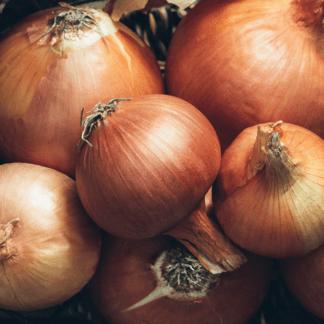 Organic New York Early Onion